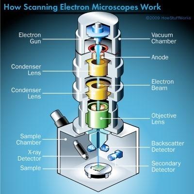 میکروسکوپ الکترونی روبشی (SEM)