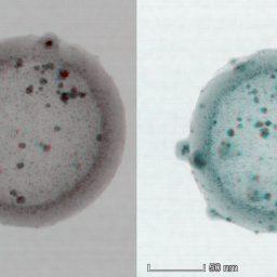 روش جدید میکروسکوپی برای تصویر برداری سه بعدی سریع و قابل اطمینان از نانوساختار های منحنی شکل