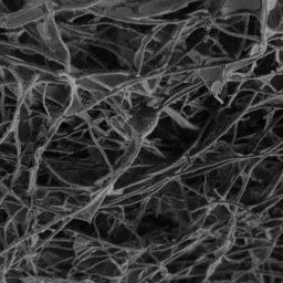 نانولوله های کربنی، پلی میان بافت های عصبی
