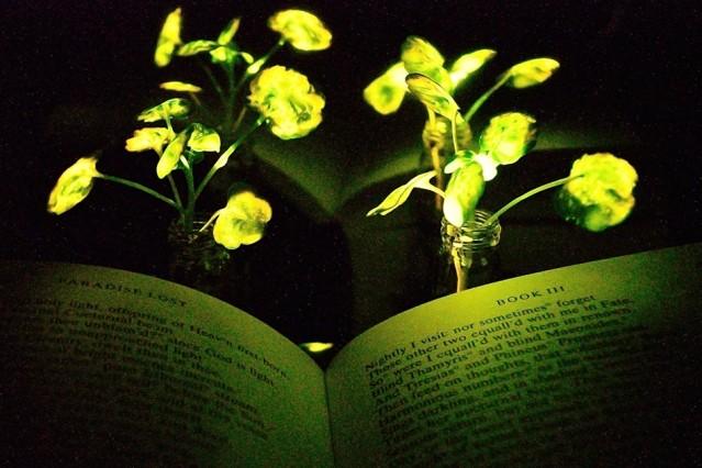 گیاهان درخشنده