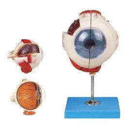 مولاژ چشم