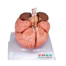 مولاژ مغز