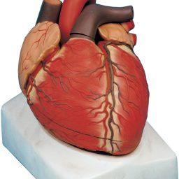 مولاژ قلب