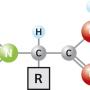 آمینو اسید چیست و چه کاربردهایی دارد؟
