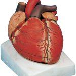 فروش مولاژ قلب