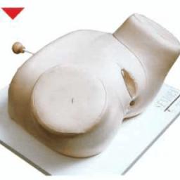 مولاژ معاینه اندام تناسلی زن
