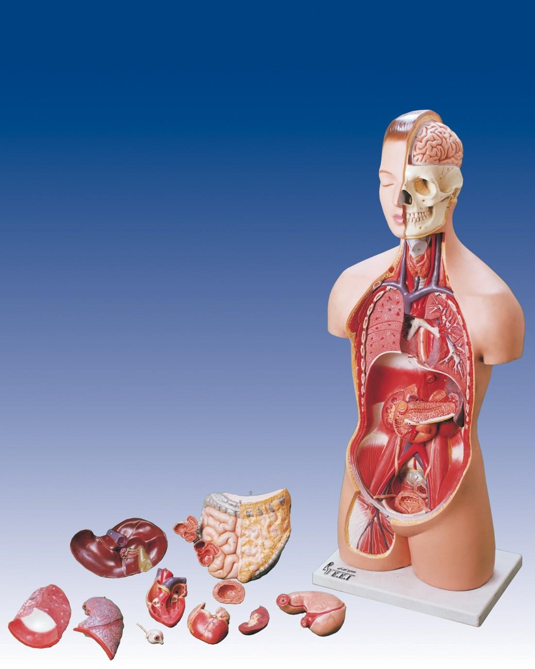 انواع مولاژ پزشکی