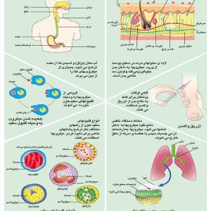 پوستر آموشی راه های دفاع بدن انسان (سیسستم ایمنی)