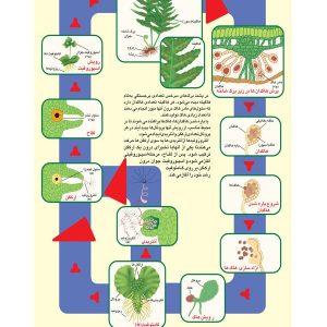 پوستر چارت آموزشی گیاه سرخس