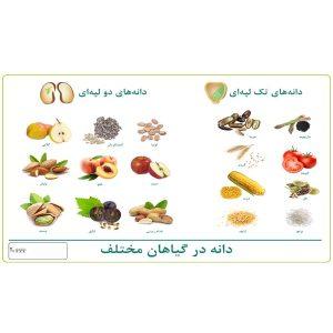 پوستر چارت دانه انواع گیاهان