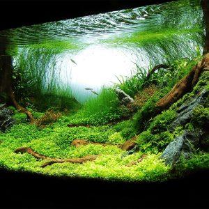 نحوه ساخت خاک مناسب برای رشد گیاهان پلنت